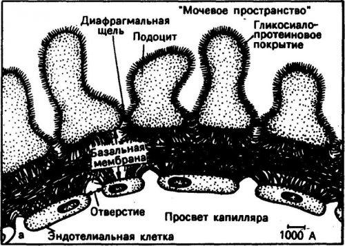 Мочевое пространство