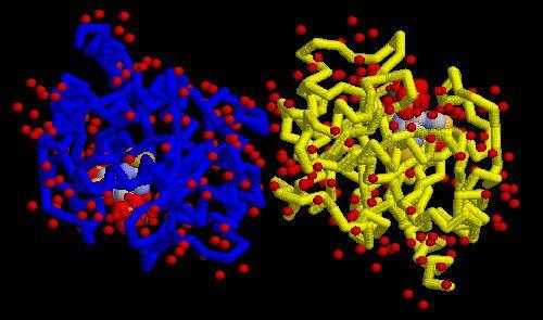 Молекулы белка