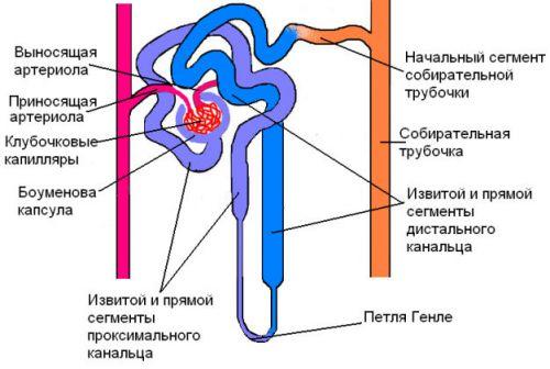 Система всасывания в канальцах