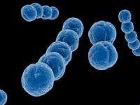 стрептококки синего цвета